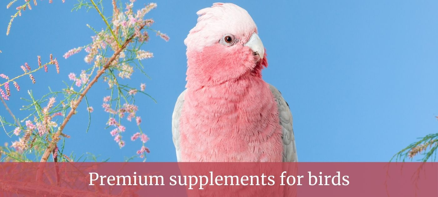 Birds supplements slider