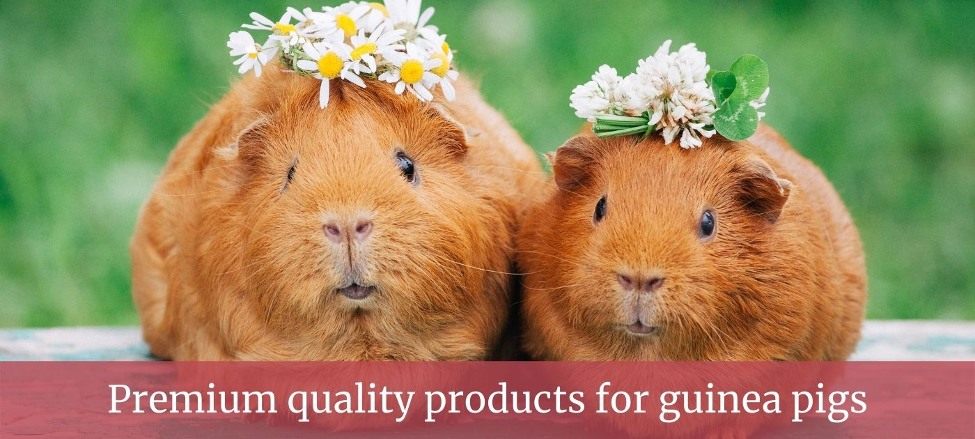 Guinea pig products page slider