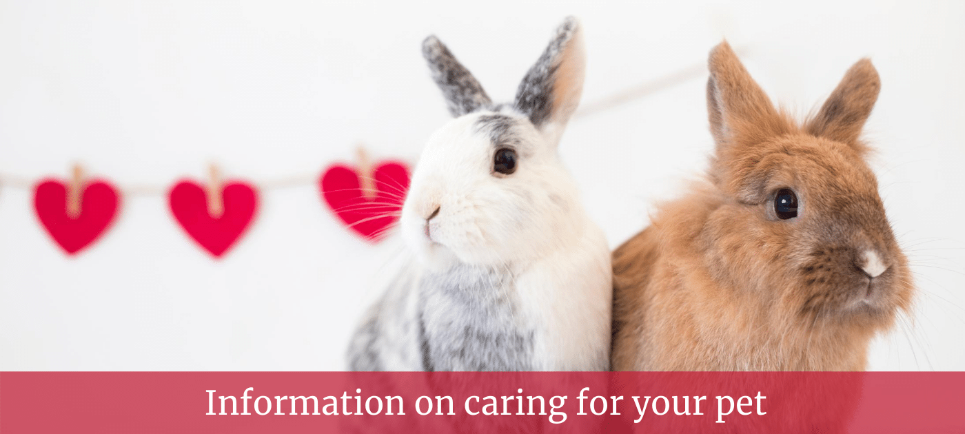 Peters Pet Care Information on caring for your pet