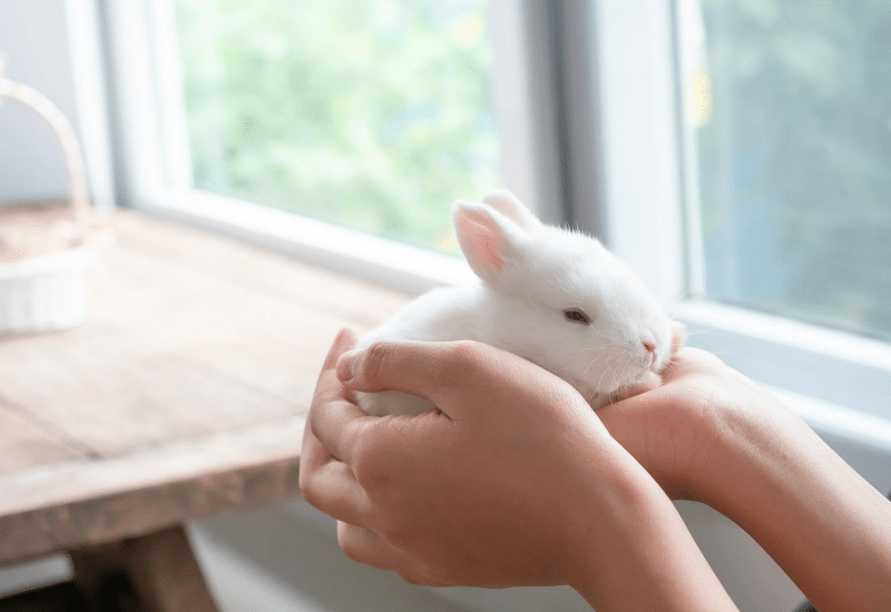 Summary info section about product range for pet type - Rabbit